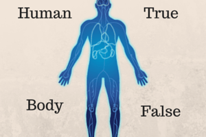 human body quiz, human body questions, human body games